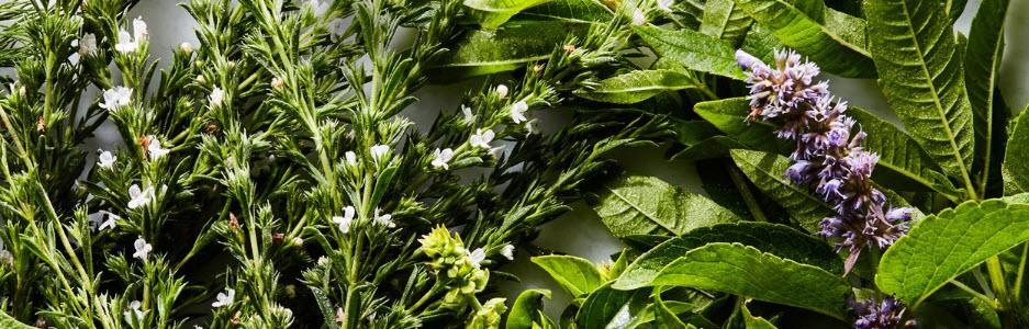 herbal background